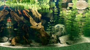 Amazon breeding tank